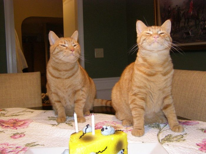Cats Birthday Party (5 pics)