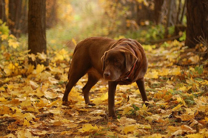 Dogs Playing In Leaves (42 pics)