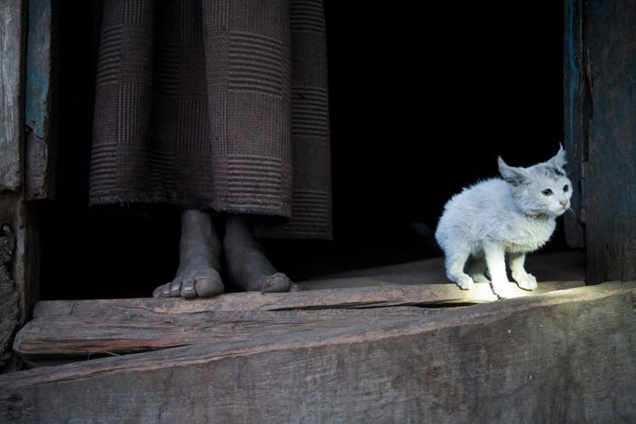 National Geographic Photo Contest 2011. Part 2 (41 pics)