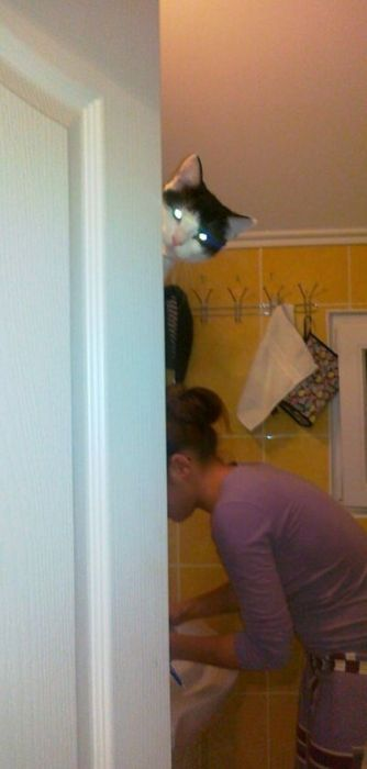 Cats Doing Evil Things (67 pics)