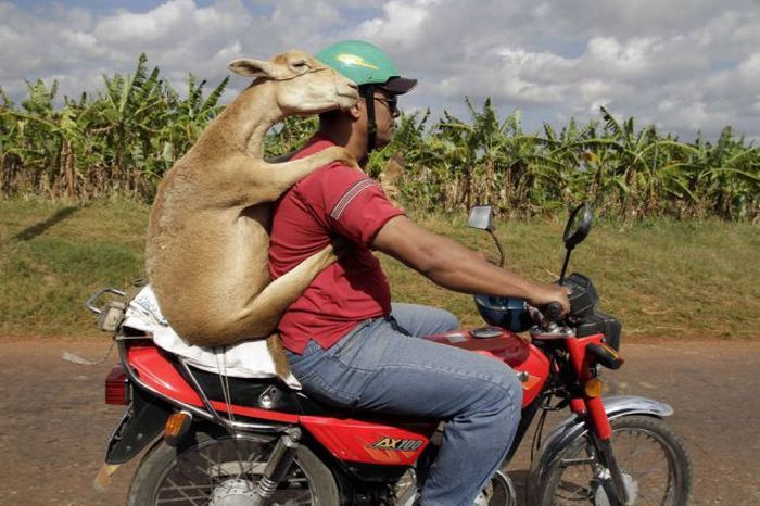 Only in South America (49 pics + 2 gifs)