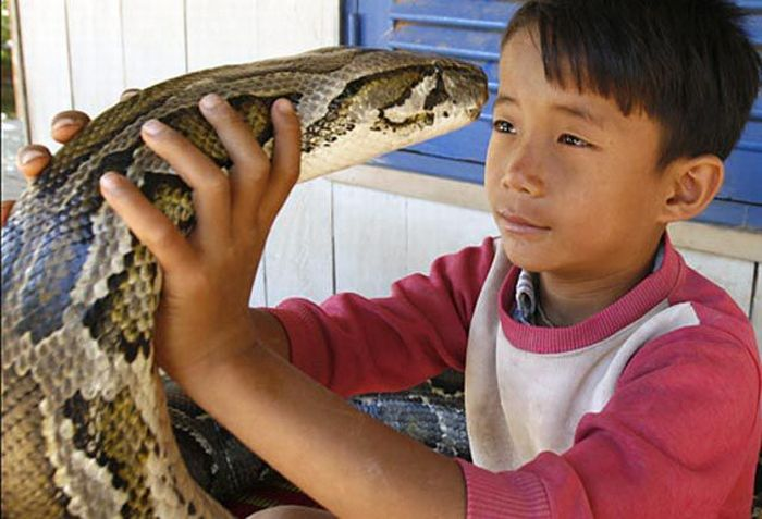Boy and His Pet Python (14 pics + video)