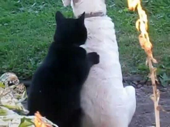Amazing Animal Massage SPA