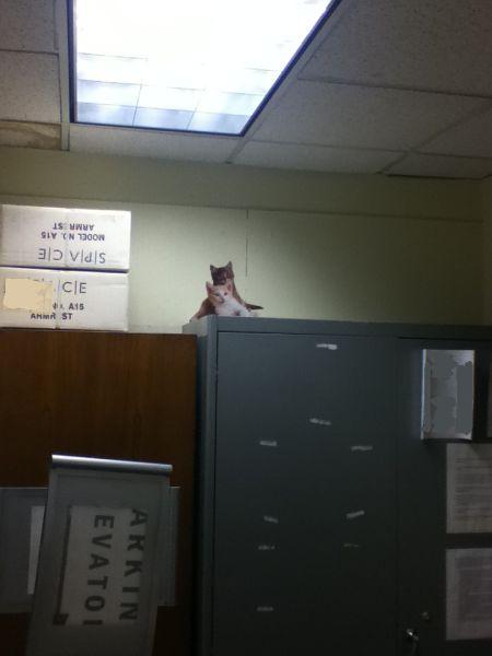 Trolling in the Office - Cute Kittens (9 pics)