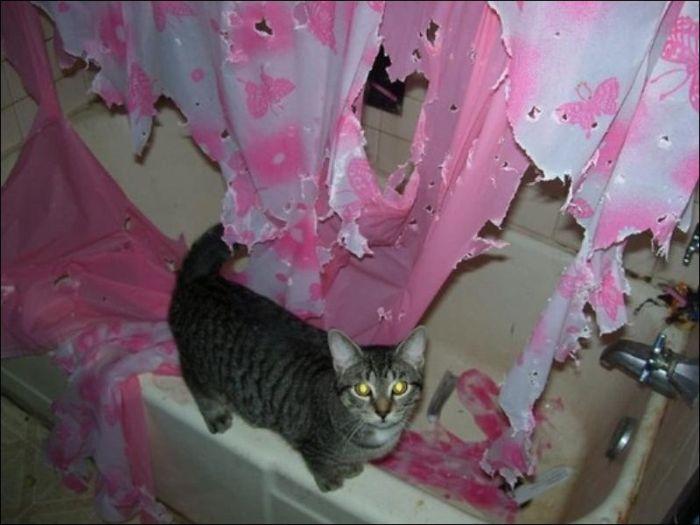 Cat in the Bathroom (2 pics)