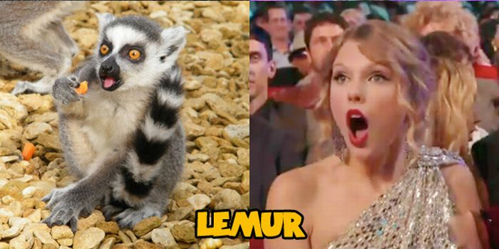 Animals That Look Like Taylor Swift (14 pics)