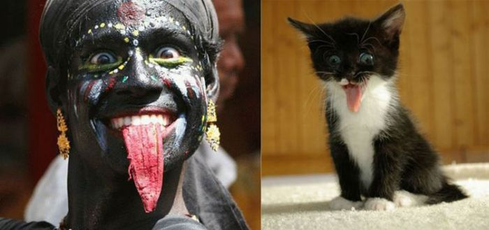 People vs Animals (22 pics)