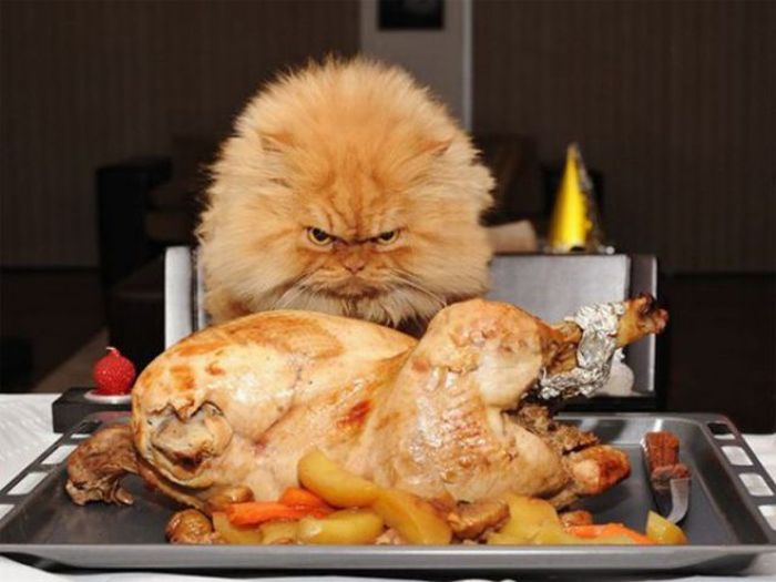 Funny Thanksgiving Moments (35 pics + 1 gif)