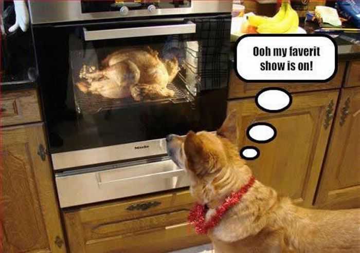 Funny Thanksgiving Moments (35 pics + 1 gif)