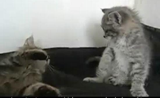 Funny Kittens Fight