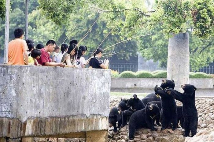 Only in China (65 pics)