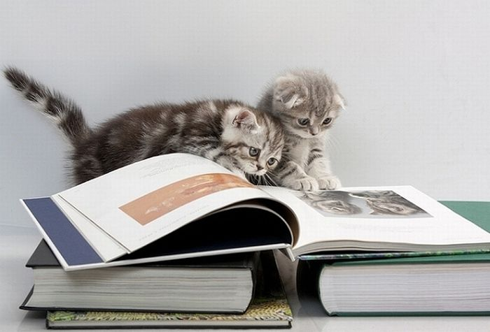 Cats Reading Books (18 pics + 1 gif)