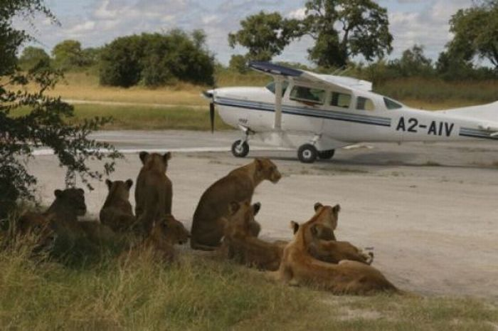 Only in Africa! Part 2 (43 pics)