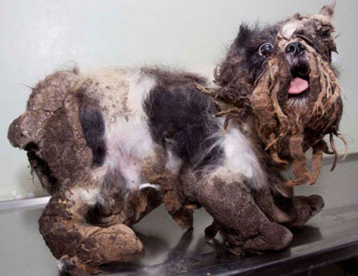 Dog's First Haircut (10 pics)