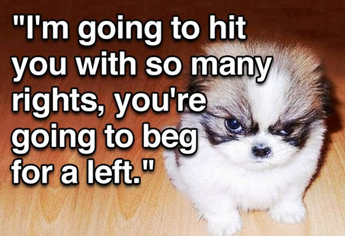 Tough Guy Movie Quotes From A Puppy (15 pics)