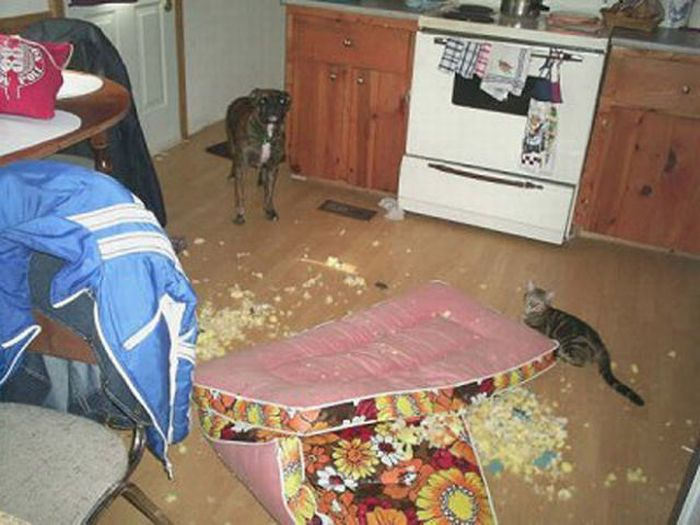 Dogs Wrecking Stuff (25 pics)