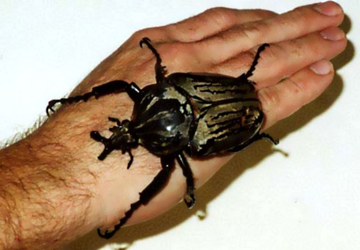 Giant Insects (47 pics)