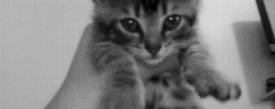 Ultimate Collection Of Cat Gifs (50 gifs)