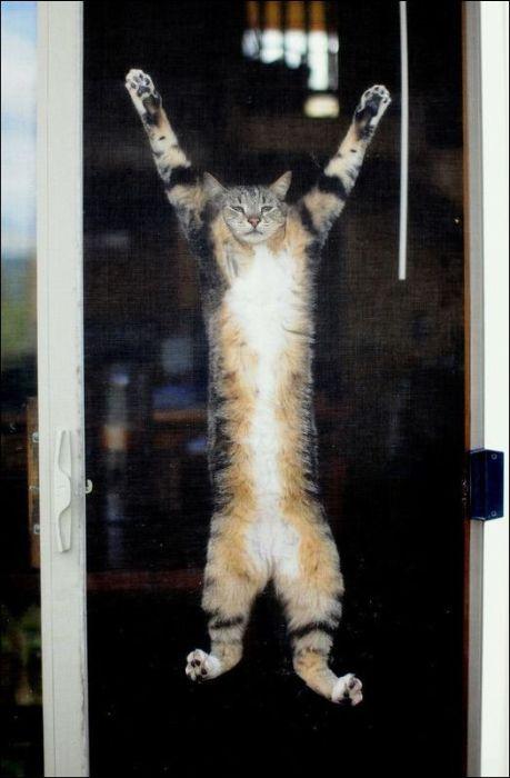 100 Cat Photos (135 pics)