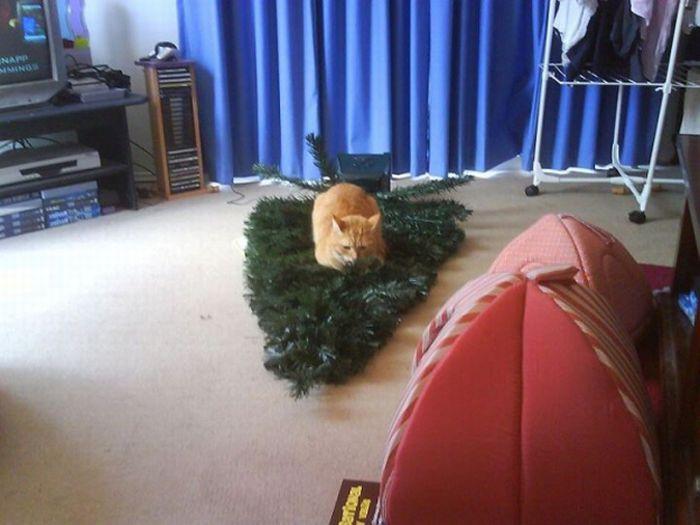 Cats Hate Christmas (20 pics)