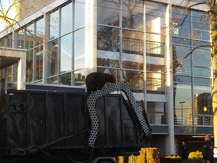 18 Month Old Bear Cub Captured In Down Town Vancouver (14 pics + video)