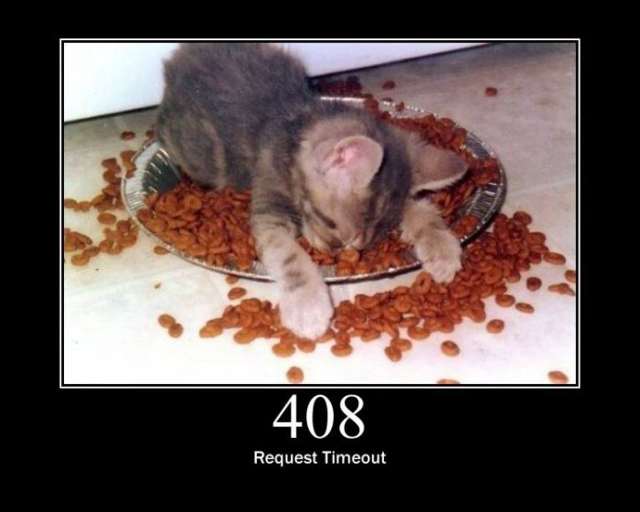 Server Errors by Cats (15 pics)