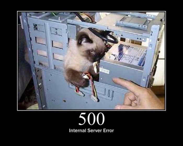 Server Errors by Cats (15 pics)