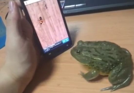 Frog Plays Smartphone Game