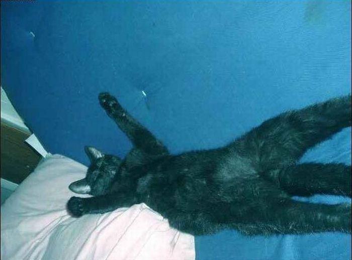 Lazy Cat (4 pics)