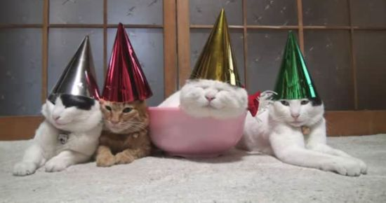 Hilarious Drunk Cats After Christmas Party