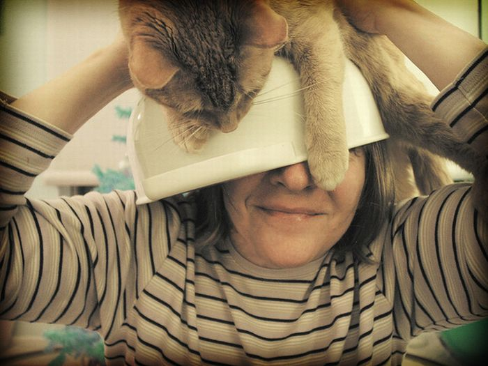 Cat Hats (40 pics)