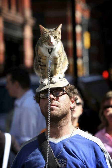 Cat Hats (40 pics)