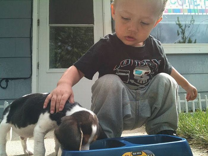 Boy Teaches His Puppy How to Eat (2 pics)