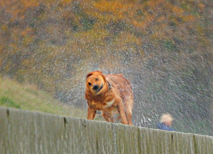 Cute Photographs of Dogs Shaking (16 pics)