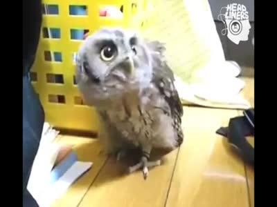 Incredibly Cute Dubstep Owl