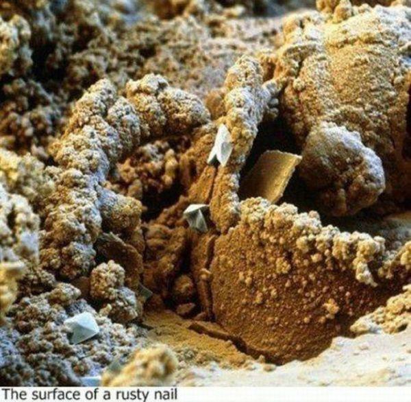 Under a Microscope (13 pics)