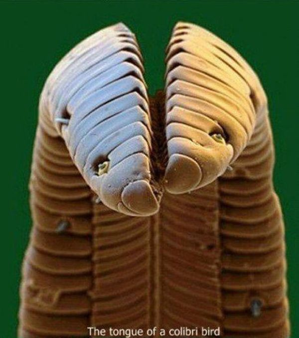 Under a Microscope (13 pics)
