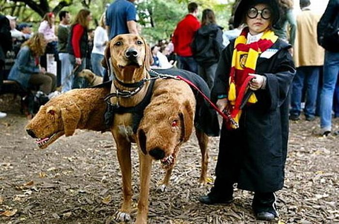Incredible Dog Costumes Inspired by the Movies (16 pics)