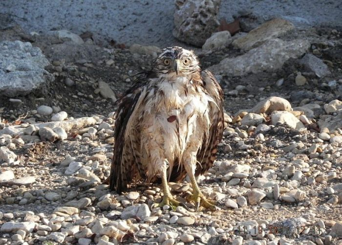What an Amazing Story. Falcon vs Snake (8 pics)
