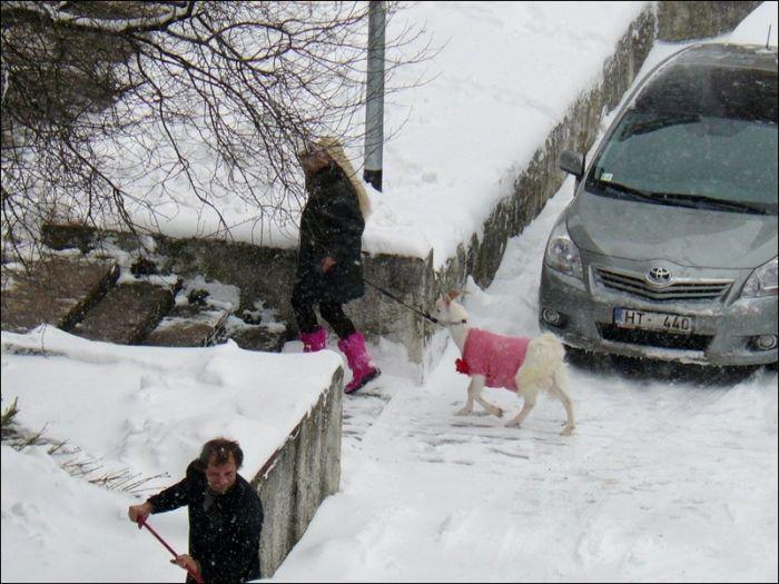 Unusual Pet in Pink (4 pics)