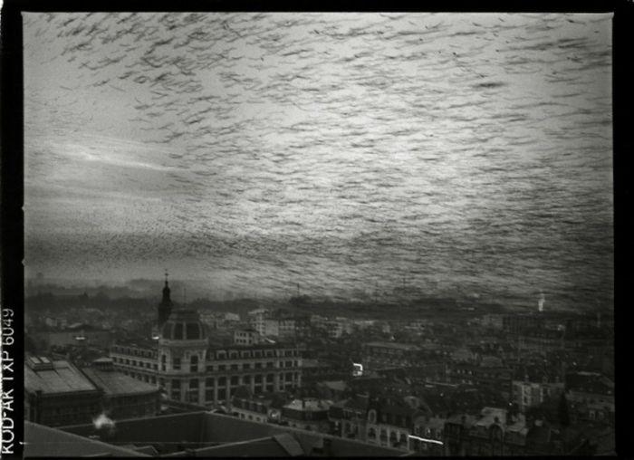 Notre-Dame de Reims Photos (91 pics)