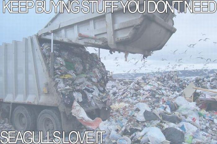 Wisdom Overload (63 pics)