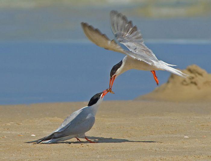 Birds by Yaki Zander (47 pics)