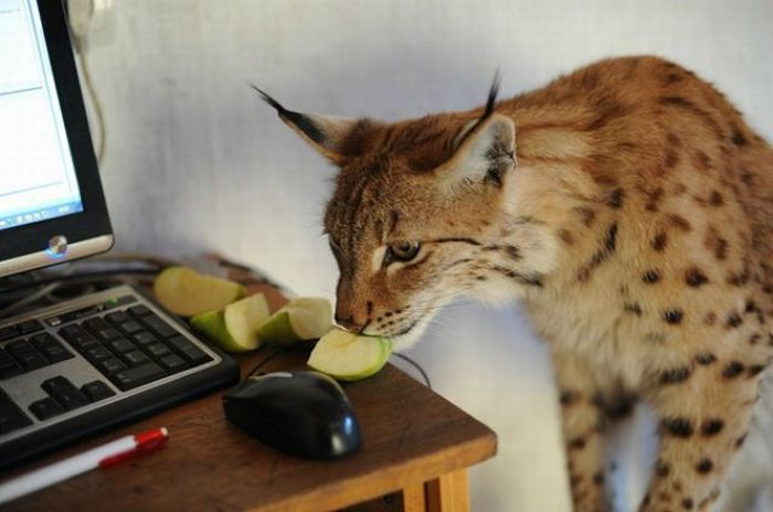Wild Animals Living in One House (83 pics)