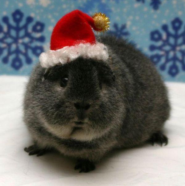 Animals Wearing Hats (64 pics)