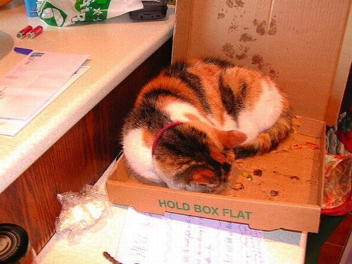 Cats Love Pizza Boxes (35 pics)