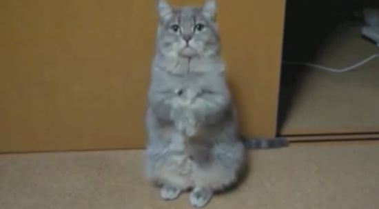 Hilarious Cat Dances Pee Wee