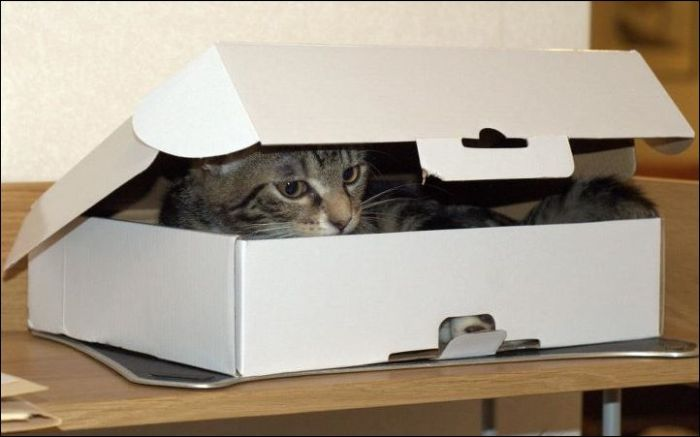 One Box Two Cats (4 pics)