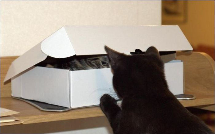 One Box Two Cats (4 pics)