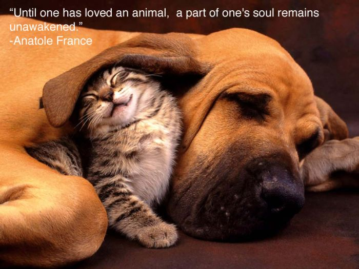 Inspiring Pictures For People Who Love Animals (25 pics)